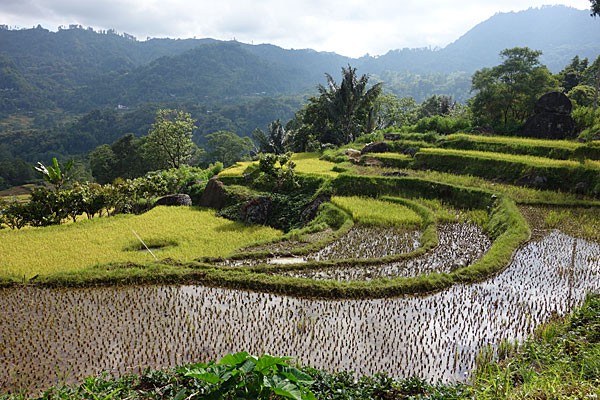 08_arrozales-en-Sulawesi-blog